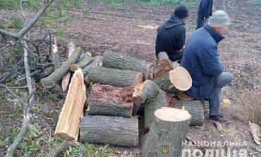 Четверо жителей Саратского района могут поплатиться свободой за вырубку деревьев в лесополосе
