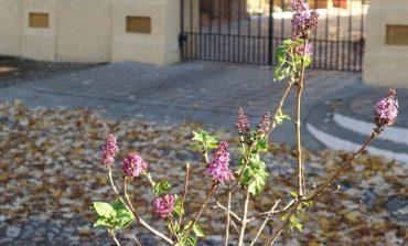 На юге Одесской области наблюдают уникальное для ноября природное явление