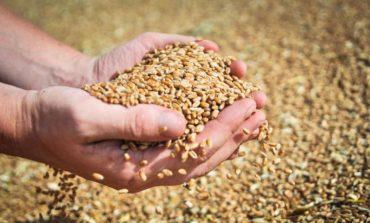 Одесчина: 2019 год стал самым неурожайным за последние четыре года