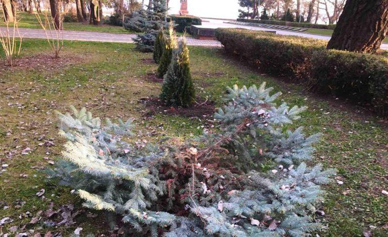 В Одессе камеры видеонаблюдения зафиксировали вандалов, срубивших ёлку на Аллее славы (видео)
