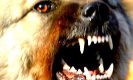 В Белгороде-Днестровском собаки нападают на людей, но карантин по бешенству отменили
