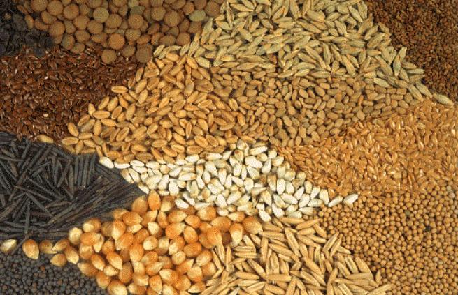 В Украине вступил в силу закон о безопасности и гигиене кормов