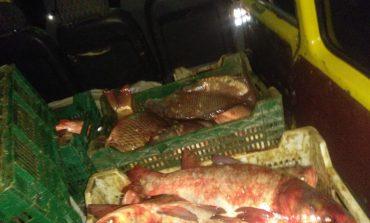 В Ренийском районе задержали бус, загруженный незаконным уловом