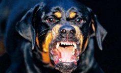 В Одессе ротвейлер едва не загрыз хозяйку: пса пришлось застрелить