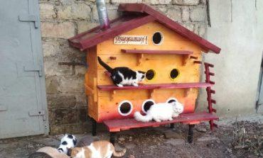 В Арцизе волонтёры  создают «общежития» для бездомных котов