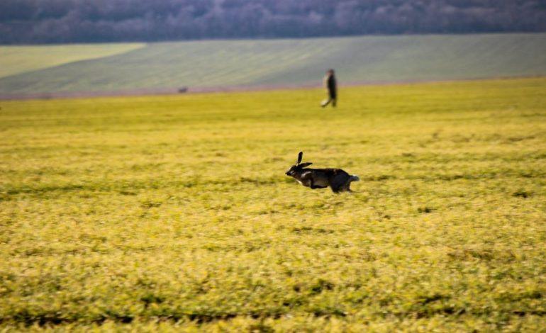 В Арцизском районе охотники провели таксацию диких животных