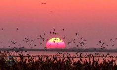 На юге Одесской области засняли невероятный восход солнца (фото)