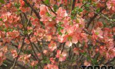 Городские пейзажи Арциза преображаются весенней красотой (ФОТО)