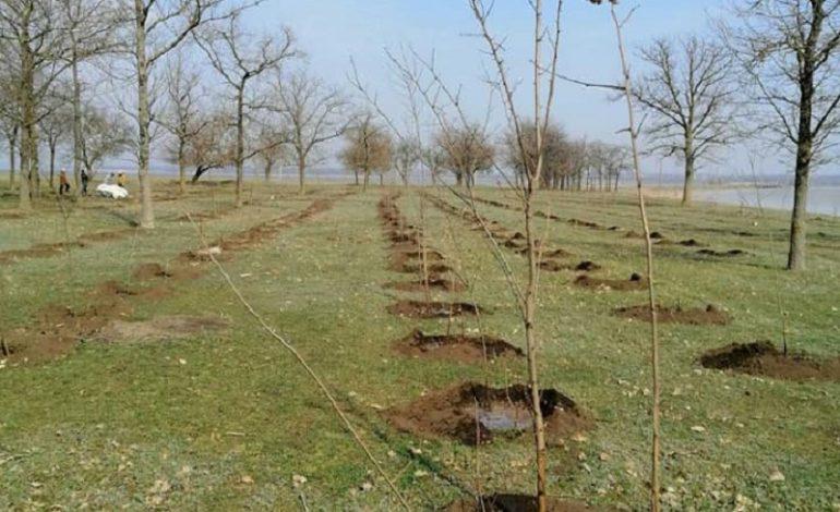 На юге Одесской области высадили около 1000 деревьев