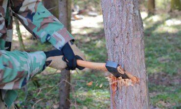 Болградский суд наказал незаконных лесорубов