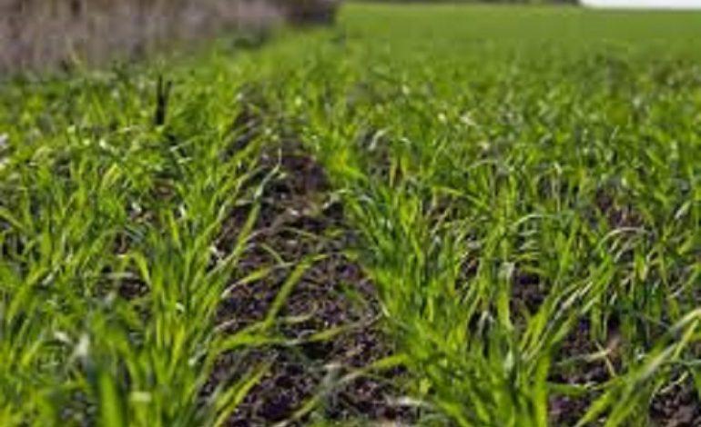 Нет денег на посевную: аграрии Бессарабии предупреждают, что не смогут посеяться весной