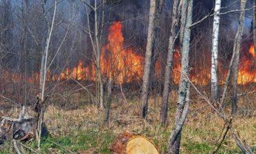 Ситуации с пожарами в Чернобыльской зоне