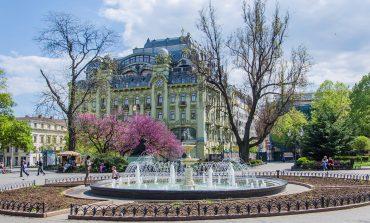 Красота в центре Одессы: распустилось иудино дерево (ФОТО)