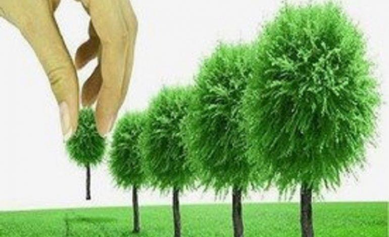 Одесситы будут знать каждое дерево в своем городе