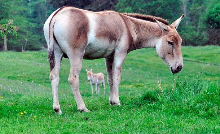 В Тарутинской степи появятся новые обитатели