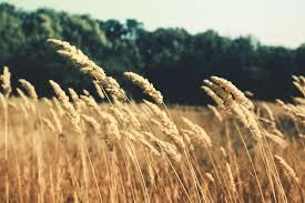 В Белгород-Днестровском районе подсчитали убытки от засухи и рассказали фермерам о компенсациях