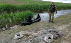 В Дунайском биосферном заповеднике задержали браконьеров