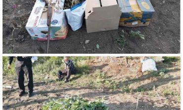 Мак и конопля – для себя, а оружие для самозащиты: в Саратском районе привлекают к ответственности пенсионера
