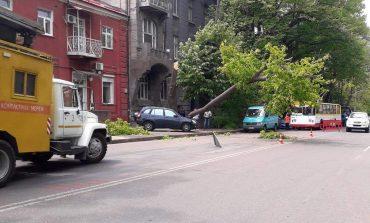 В Одессе упавшее дерево побило внедорожник и остановило троллейбусы (фотофакт)