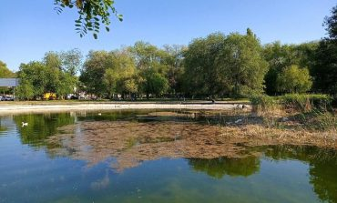 Дюковский парк: почти лес с утками, но очень грязно (фото)