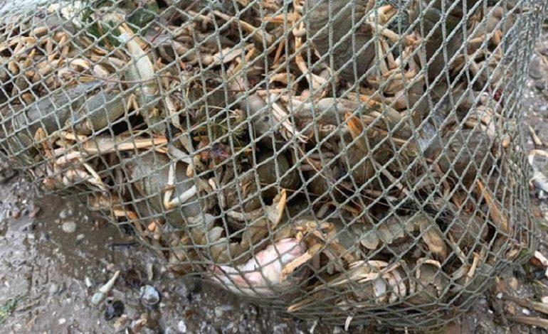 На реке Дунай и Придунайских озерах ловить раков пока нельзя