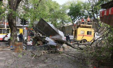 В Одессе упавшая ветка раздавила овощной ларек