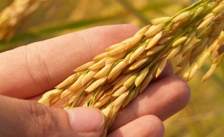Орошение и легализация: Одесская ОГА требует от громад развивать аграрный сектор
