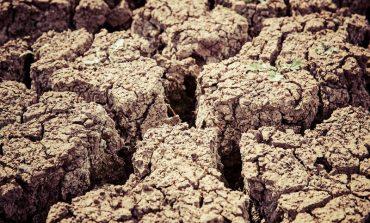 В Белгород-Днестровском районе 47 фермерских  хозяйств подсчитывают убытки из-за засухи