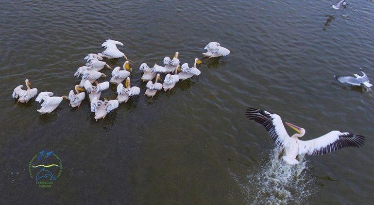 На юге Одесской области установили статую пеликана