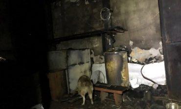 В Одессе горел приют для животных: эвакуировали собак и кошек