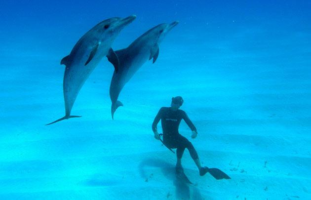 Отдыхающего в Белгород-Днестровском районе едва не убили… дельфины