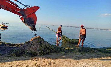 На одесских пляжах начали уборку зеленых водорослей экскаваторами (фото)