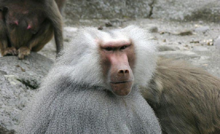 В Одессе ищут сбежавших из зоопарка обезьян