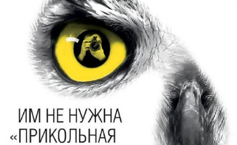 В Одессе составили свыше 20 протоколов на уличных фотографов с животными