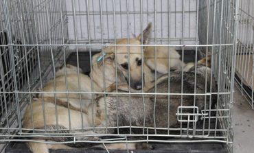 Почему Белгород-Днестровские бродячие псы в шоке