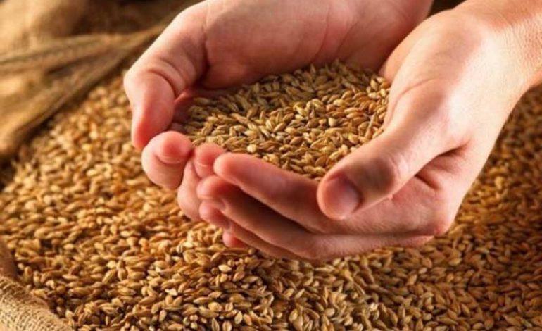 В Одесской области объемы зерновых и зернобобовых сократились почти вдвое
