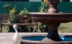 Саратский район: в Молодовском парке замечен необычный посетитель