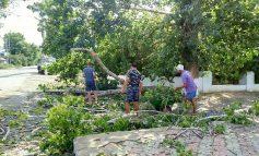 Арциз: дождя не было, но деревья падали ( фотофакт)
