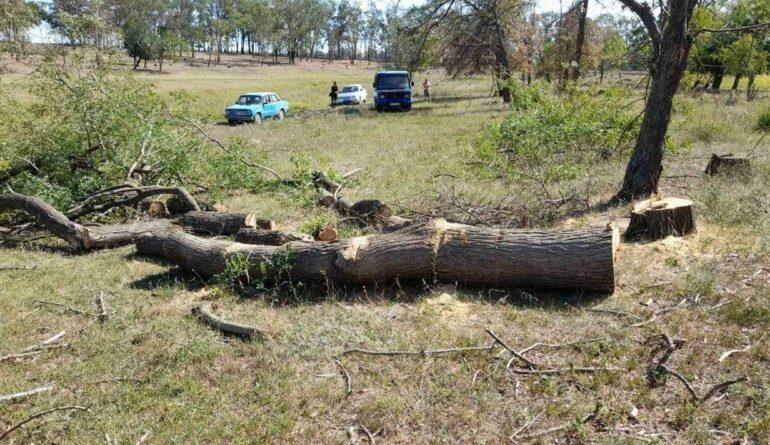 В Татарбунарах местный житель спилил дубы в излюбленном месте отдыха граждан