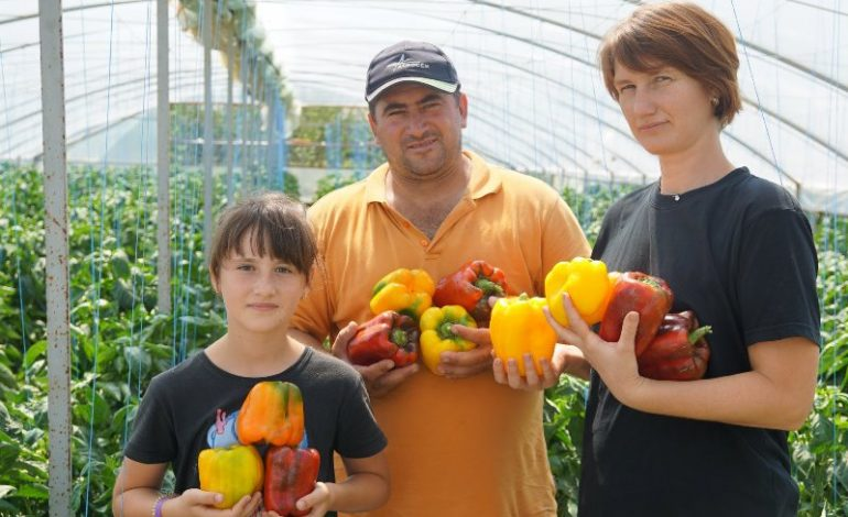 В селе Владычень Болградского района планируется строительство завода по переработке бессарабских овощей