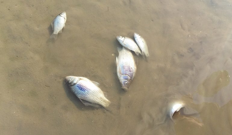 В Татарбунарском районе на лимане зафиксировали мор рыбы