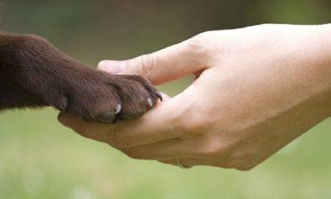 В Татарбунарах полицейские спасли собаку, которая провалилась в канализационный люк