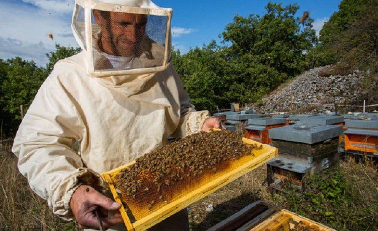 Пчеловоды Белгорода-Днестровского  получат дотацию