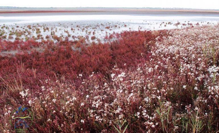 Тузловские лиманы превратились в сказочную розовую долину