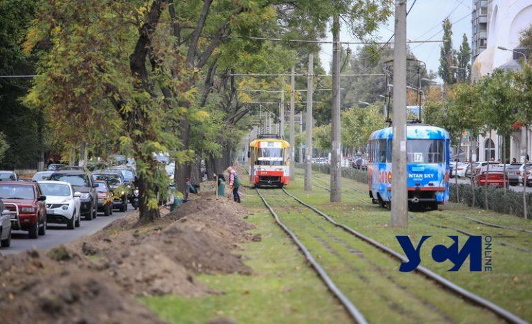 В Одессе на Фонтанской дороге высаживают «Зеленый тоннель» (фото)