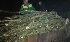 Какими дровами под покровом ночи запасались  в Белгород-Днестровском районе