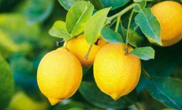 В Украине растут цены на лимоны