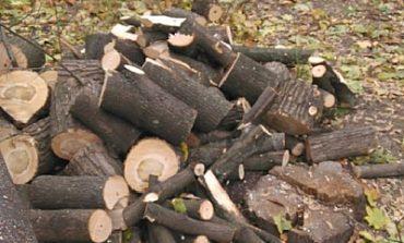 О штрафах за вырубку деревьев напомнили в Староказацкой ОТГ Белгород-Днестровского района
