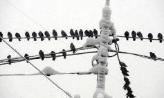 В Одесской области из-за снегопада без света остались больше 40 населенных пунктов