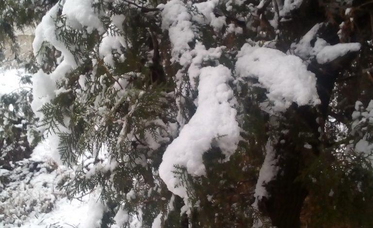 Жителей Арциза зимней графикой порадовал первый снег (фото)